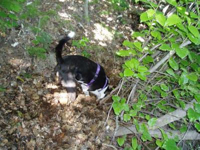 Anna Digging